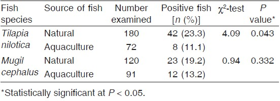 Table 1 Prevalence of metacercarial infection in <i>Tilapia nilotica</i> and <i>Mugil cephalus</i> collected from the El-Mex Bay by the source of collection during the period 2011– 2012